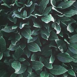 gogreen shrubbery nature plants leafs freetoedit