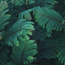pcintonature gogreen_nature_is_calling vegetation leaves greennature freetoedit