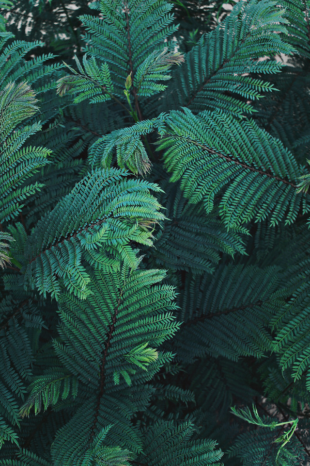 #pcintonature #gogreen_nature_is_calling #vegetation #leaves #greennature #beautifulgreenery #vegetablelife #greenplants #flora #plantkingdom                                                        #greenisgood to #myeyes and to #mysoul  🌿 #naturephotography  #freetoedit