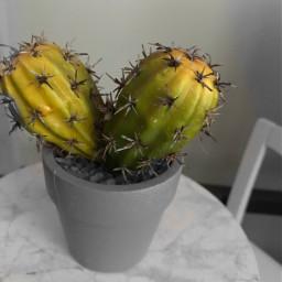 eccolorsplasheffect colorsplasheffect colorsplash cactus aeshtetic
