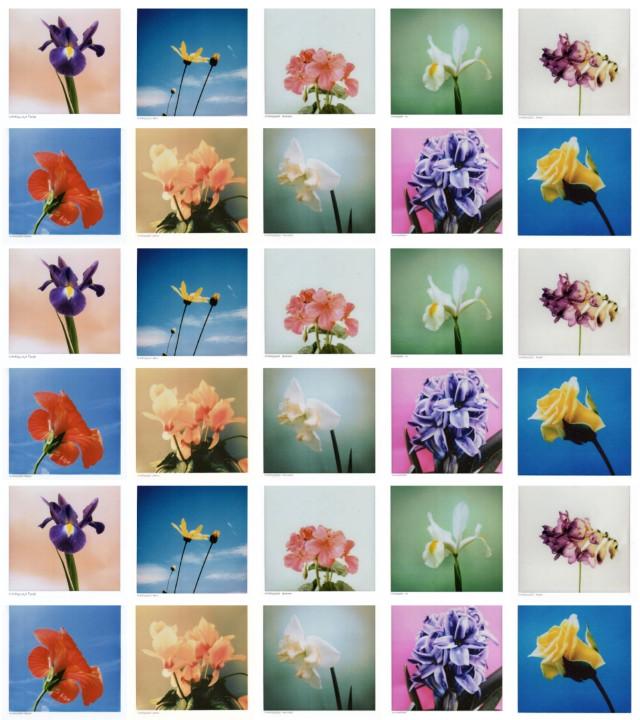 #collage #flower #instantphotography #polaroid #myart