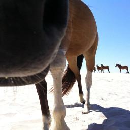 beachlife beachview wildanimals horses myphoto
