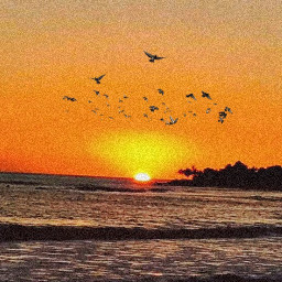freetoedit sunset beach sun