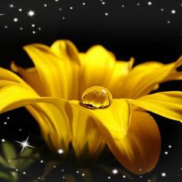 freetoedit flower yellow_flower dropofwater drop