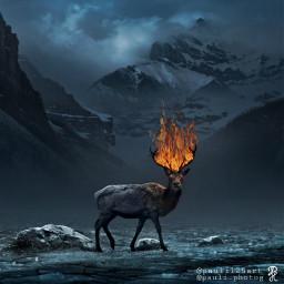 deer burning fire enterimagination imagine