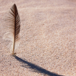 sanddunes beachvibes feather sunnylightandshadows keepitsimple freetoedit