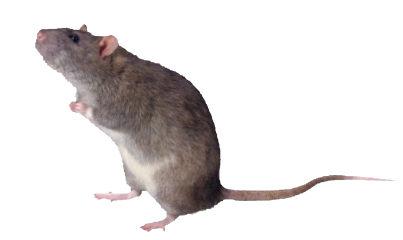 rat goth freetoedit