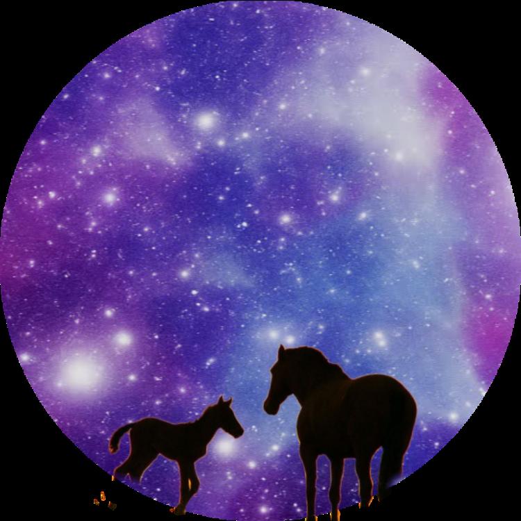 Horses😍😍#night #horses