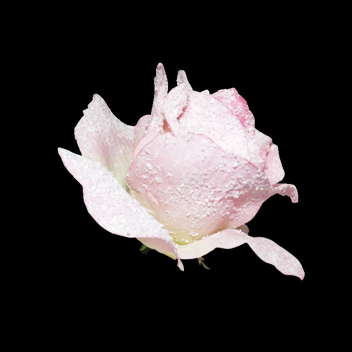 #cuorelucymy #corner #rosa