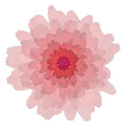 freetoedit flower sticker addsticker layers