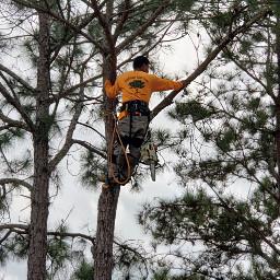 worker treetrimer man yellow pinetrees freetoedit pcworkinghard