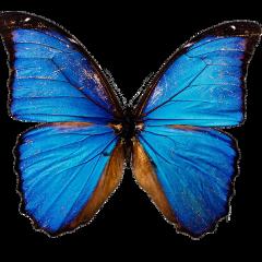 butterfly moth moodboard png filler freetoedit