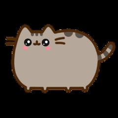 socute cute cat cool colour