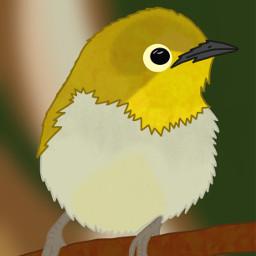 dcspringbirds springbirds