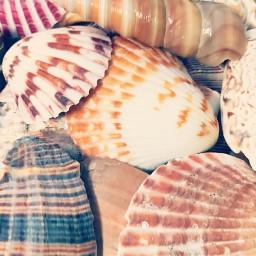 myphotography seashells