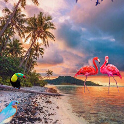 bird freetoedit interesting beach
