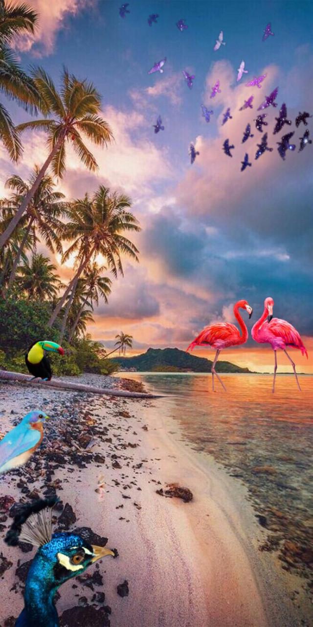 #freetoedit #interesting #beach #birds #vacation #challenge