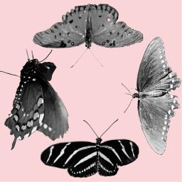 freetoedit butterflies sticker addsticker cutout