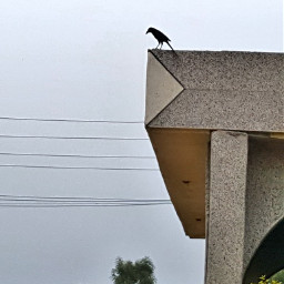freetoedit pcbird bird