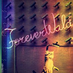 freetoedit surveillance kittenplay lynnbrewer