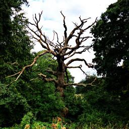 pcforest forest freetoedit jungle iphonex