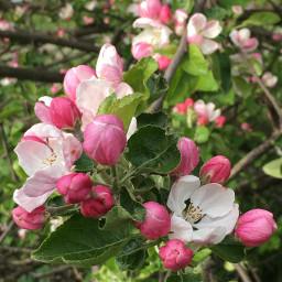 photo nature flowers spring freetoedit