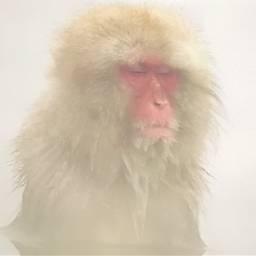 freetoedit hazy foggy monkey petsandanimals