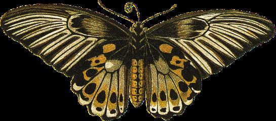 freetoedit butterfly2 moth