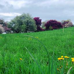 freetoedit blooming trees spring park