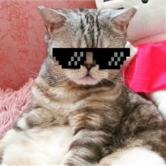 cat_maks_5