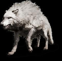 freetoedit amazing creative animal wolf