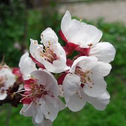 freetoedit blossom flowerpower flowerslovers lovely