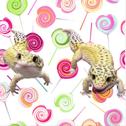 leopardgeckos lollypop longingfortreat cute freetoedit