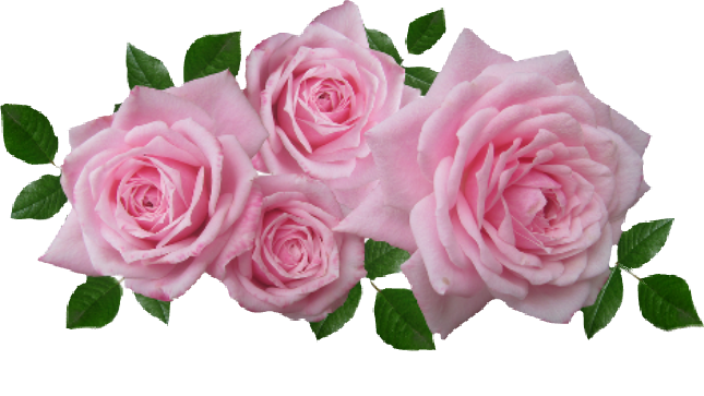roses aesthetic pink rose flowers cute nature plants...