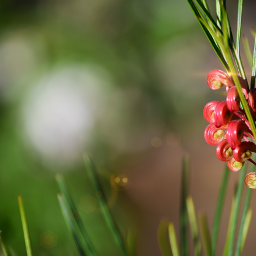 flowers specialflowers mygarden lensflare fincalasierra
