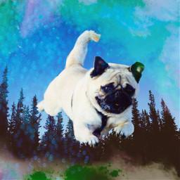 ircflyingpug flyingpug freetoedit dog