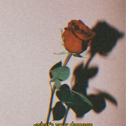 freetoedit heathers aesthetic rose redaesthetic