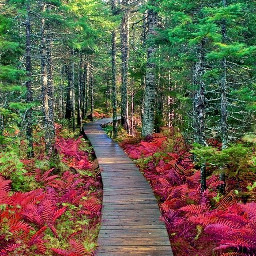 freetoedit nature walkway trees woodland