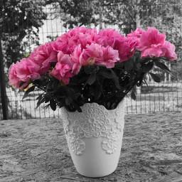 flowers spring pink
