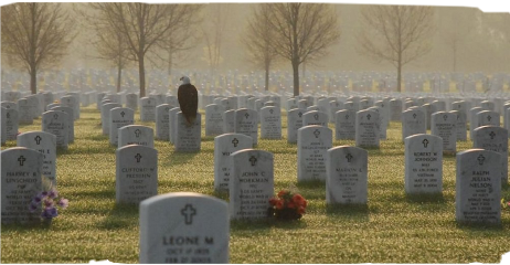 cemetery eagle bird petsandanimals graves freetoedit
