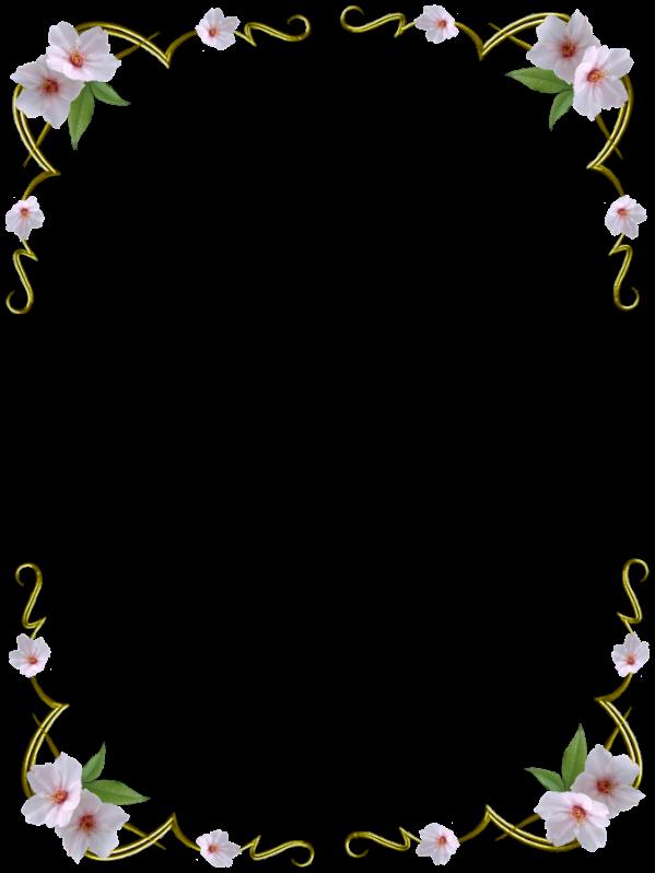 Flower Frame Frames Pretty Borders Border Tropical Hawa