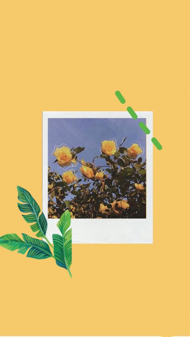 #freetoedit #aesthetic #yellow #green #polaroid #sunflower #tumblr #glitch #plant #leaf