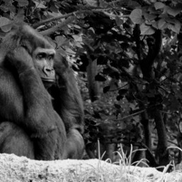 pczoo zoo