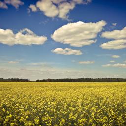 yellow nature landscape lumia950xl freetoedit