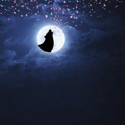 wolf♥️♥️ freetoedit wolf