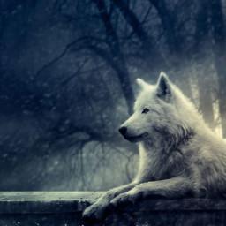 freetoedit wolf darkforest lonewolf