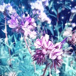 freetoedit garden fotoedit floral flowerpower