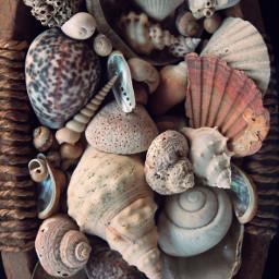 organicvibes seashells conchshells basket handmade freetoedit