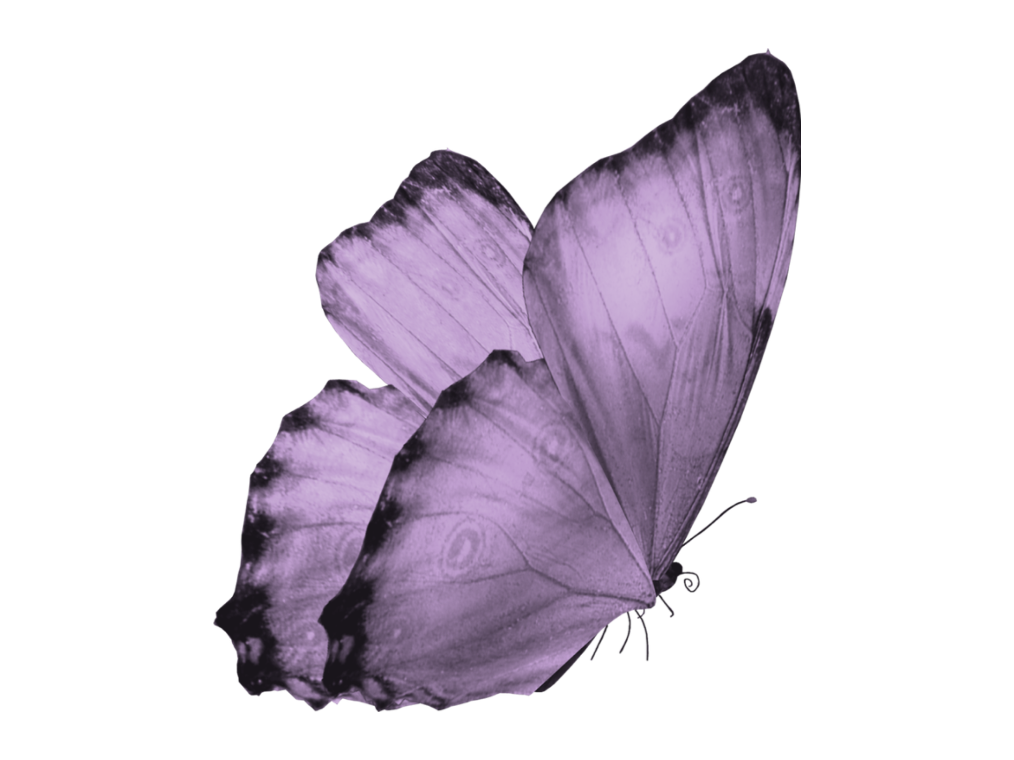 Wallpaper Purple Butterfly Aesthetic