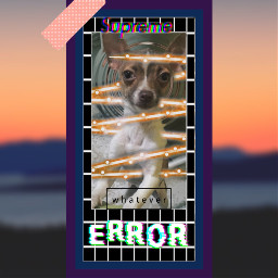 dog doggo freetoedit